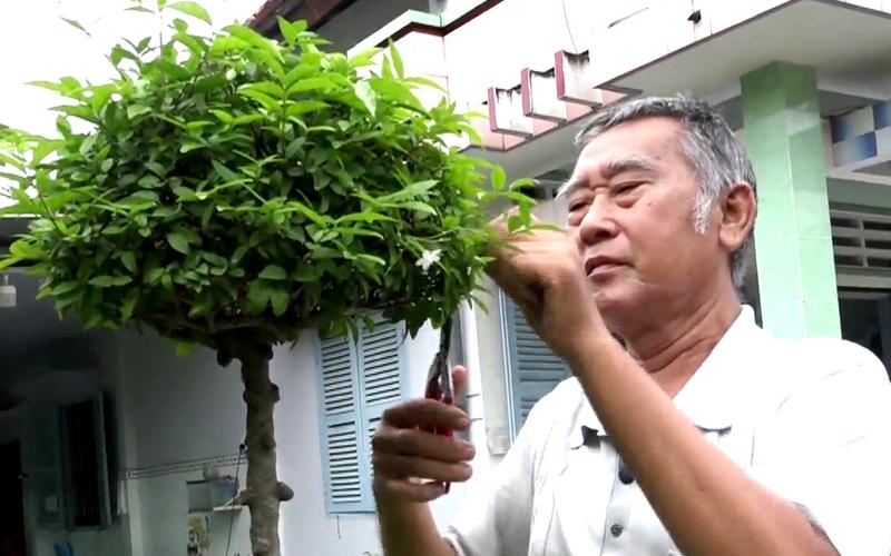 Tiền Giang: Trồng loại cây kiểng cổ mặt khỉ, u nần khắp thân này, ông nông dân có khu vườn tiền tỷ