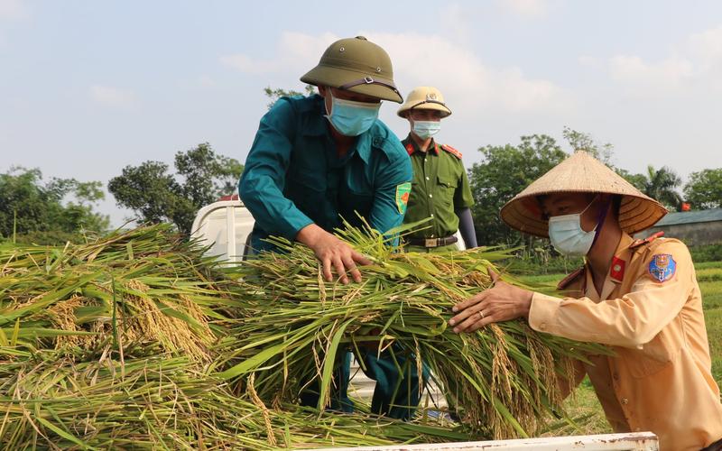 Công an Vĩnh Phúc xuống đồng thu hoạch lúa giúp người dân đang phải đi cách ly y tế