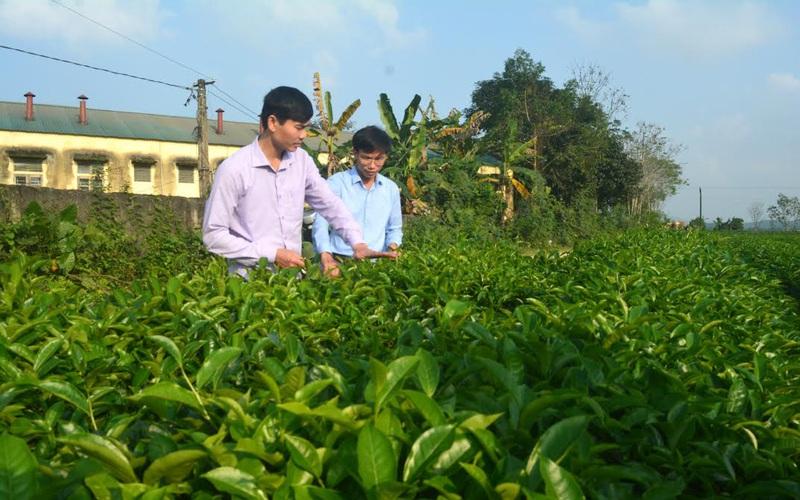 """Nghệ  An: Giúp  bà con nông dân gỡ khó tiêu thụ nông sản """"mùa dịch"""""""