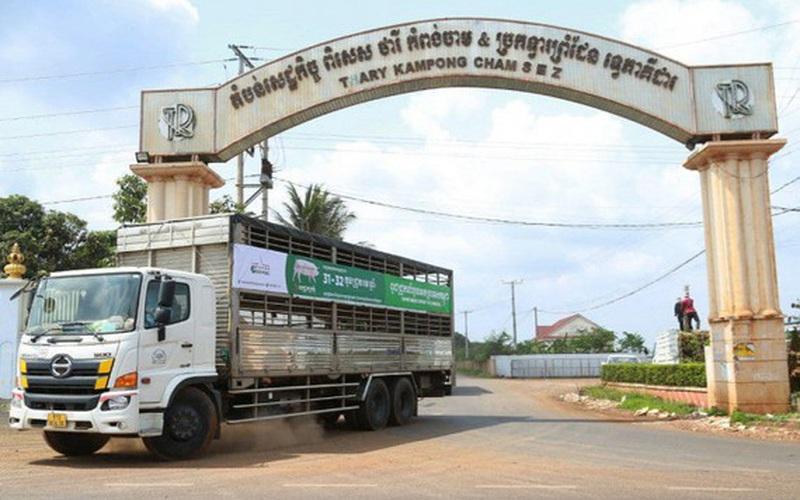 Doanh nghiệp Việt xuất khẩu lợn sang Campuchia cần theo đường chính ngạch