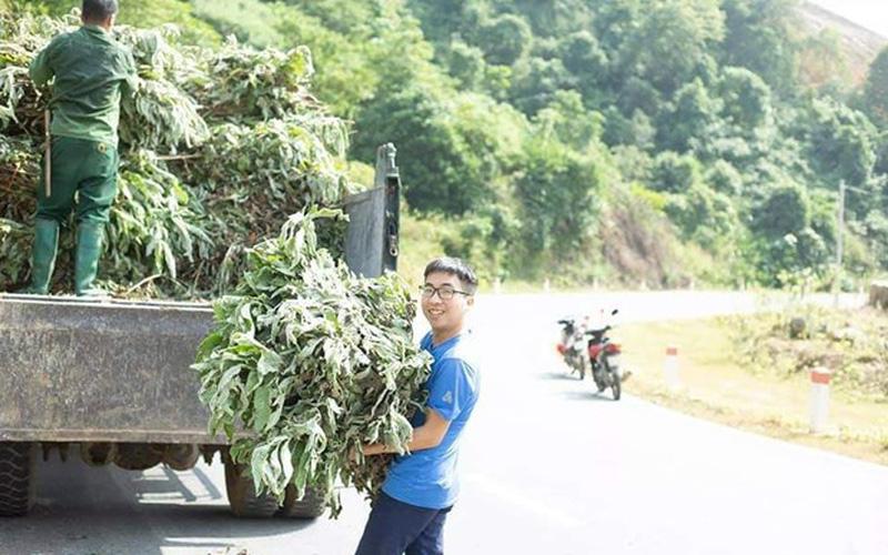 Trai làng tỉnh Lào Cai trồng các loài cỏ dân dã vườn nhà, bất ngờ lại giàu lên