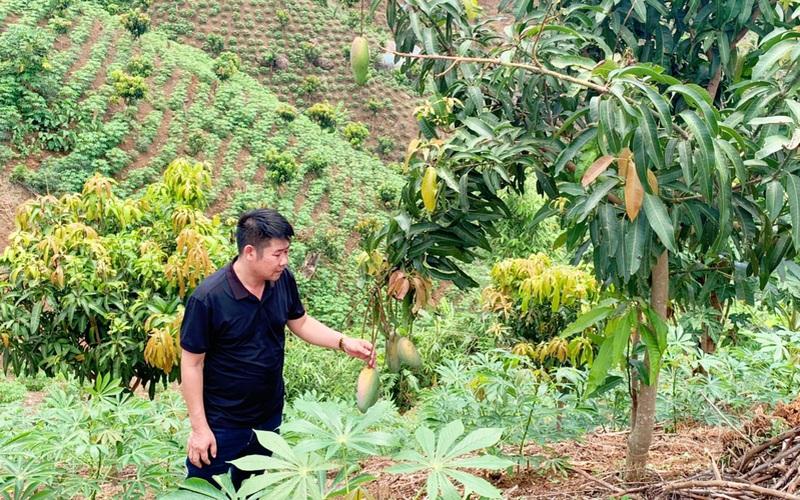 Nậm Nhùn: Kiểm tra tiến độ sinh trưởng, phát triển của cây xoài, cây nhãn