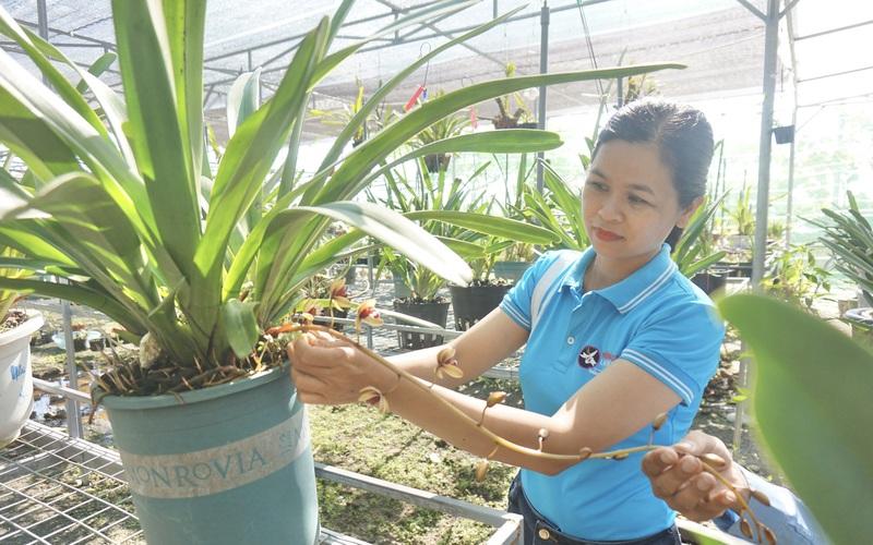 Đà Nẵng: Ngắm vườn lan rừng trị giá hàng chục tỷ đồng với la liệt các loài hoa lan giả hạc đột biến đắt tiền