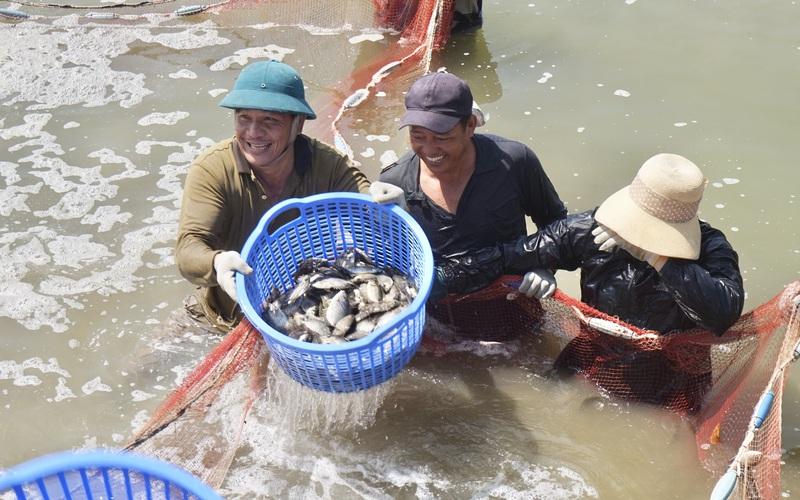 Đà Nẵng: Sau 10 năm xây dựng nông thôn mới, Hoà Vang ghi dấu ấn từ đột phá đa lĩnh vực