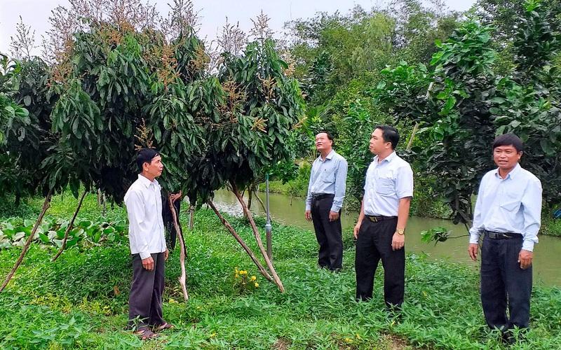 Vựa lúa Đồng Tháp Mười sống cùng nỗi lo cây - con mới (Bài 2): Bỏ lúa, thu hái trái ngọt