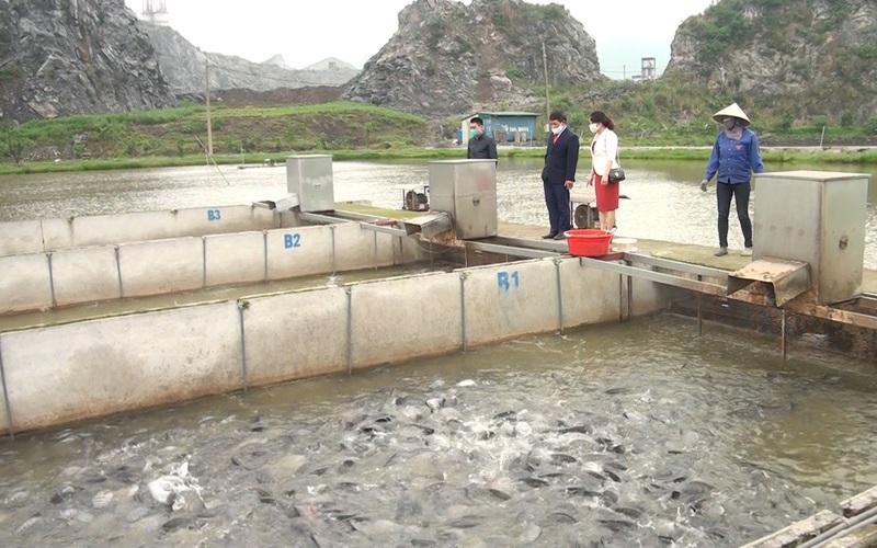 Hà Nam: Thu nhập của nông dân tăng nhờ nuôi cá trắm đen công nghệ sông trong ao mật độ dày đặc