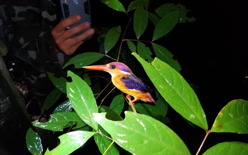 Toàn tỉnh Đồng Nai có bao nhiêu cơ sở nuôi động vật hoang dã, trong đó có bao nhiêu loài nguy cấp?
