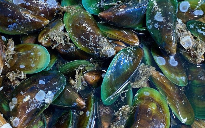 Loại hải sản nhiều nơi quý như vàng, rất giàu dinh dưỡng nhưng người châu Phi nhất định không ăn
