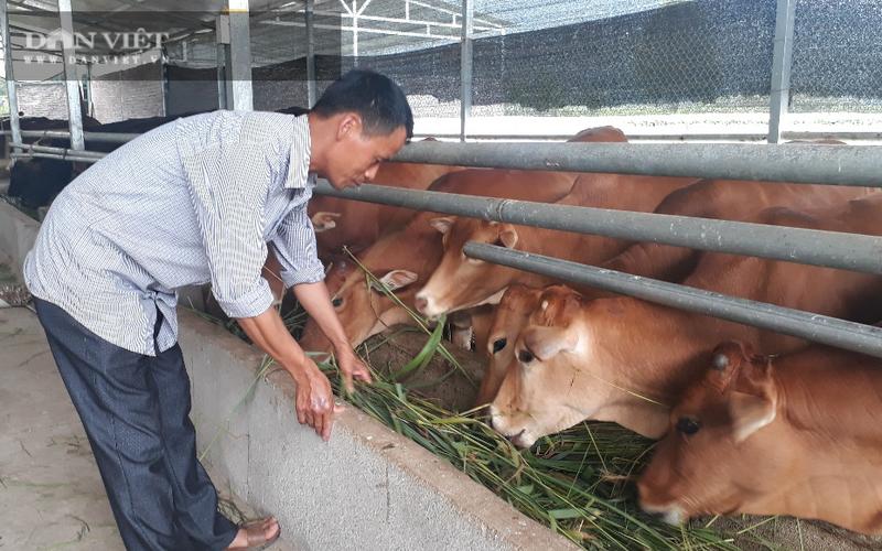 Lai Châu: Nuôi bò mấy chục con, toàn con to bự, nhưng vì sao ông nông dân này chỉ dọn chuồng 1 lần/năm?