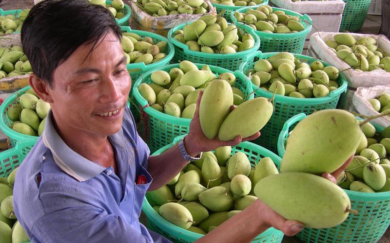 Ba loại trái cây của Việt Nam đang bán lượng khổng lồ sang Trung Quốc sẽ phải cạnh tranh với Campuchia, là những quả nào?