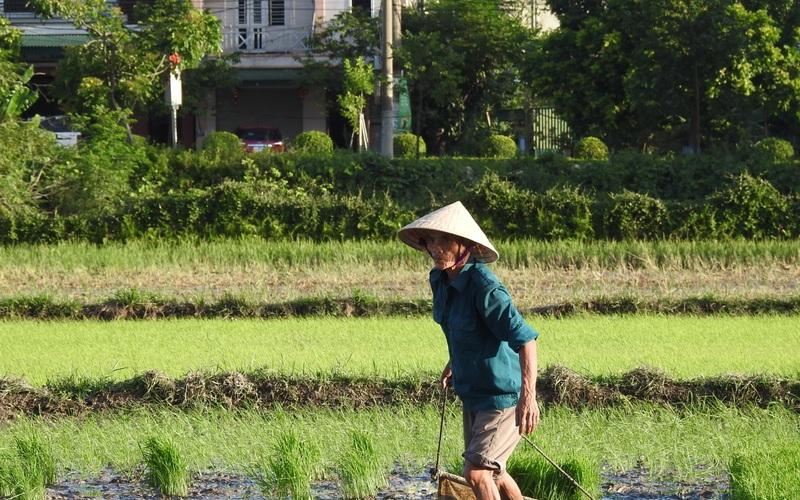 Hà Tĩnh: Nông dân tích cực phục hồi sản xuất vụ Hè Thu sau bão số 2