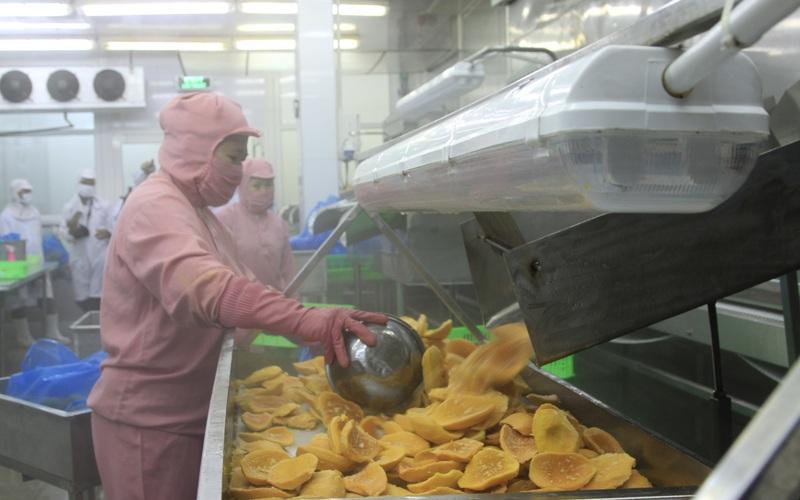 Trung Quốc vung tiền mua lượng trái cây khổng lồ của Việt Nam, loại quả nào được mua nhiều nhất?
