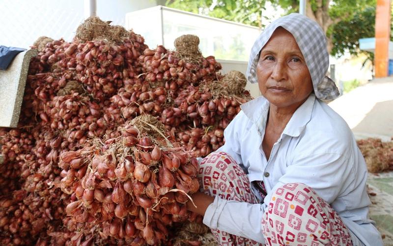 Ninh Thuận: Hành tím rớt giá, nông dân đứng ngồi không yên