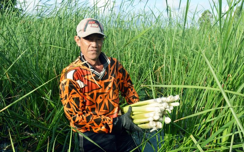 Cà Mau: Dân xóm nghèo đổi đời nhờ trồng cỏ dại làm các món đặc sản