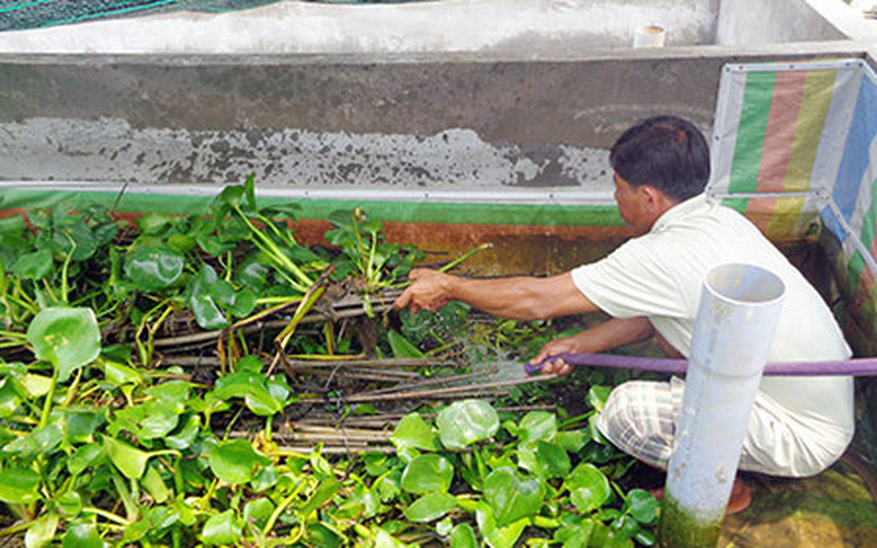 """Hậu Giang: Giá lươn từng """"làm mưa làm gió"""", nhưng giờ nông dân bắt toàn lươn to mà bán giá rẻ"""