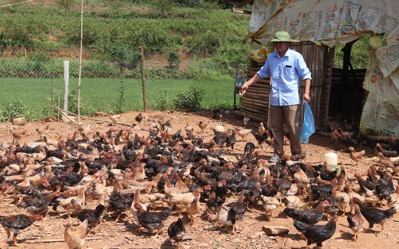 Lão nông người Thái thu hơn trăm triệu mỗi năm nhờ mô hình chăn nuôi tổng hợp