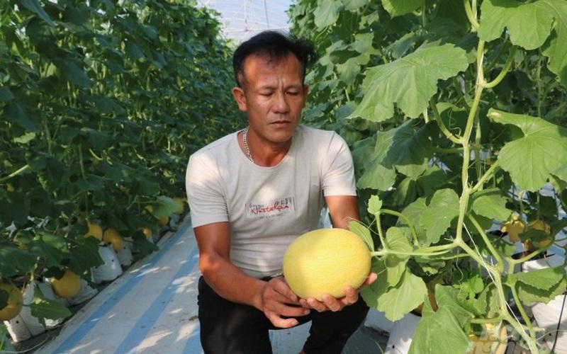 Hưng Yên: Nông dân thu nhập khá từ chuối tây, dưa lưới