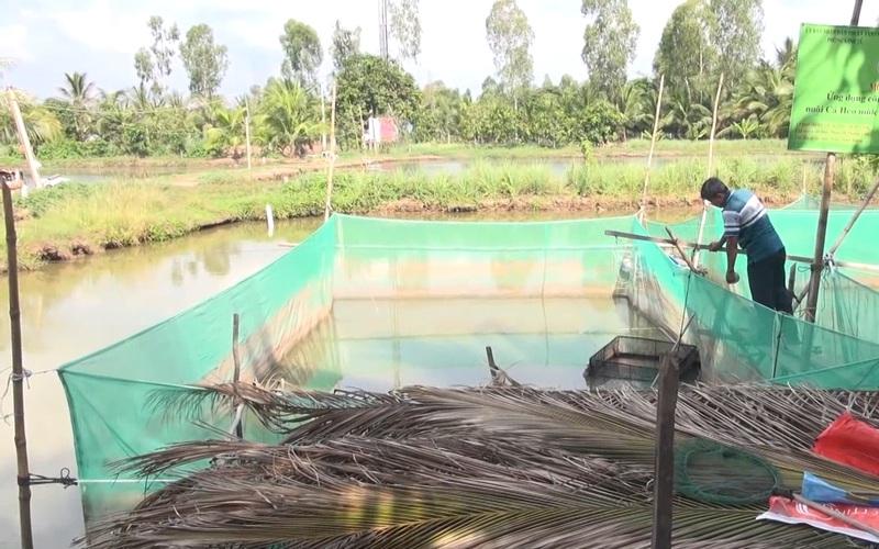 An Giang: Nông dân áp dụng công nghệ, nuôi cá heo vèo trong ao đất