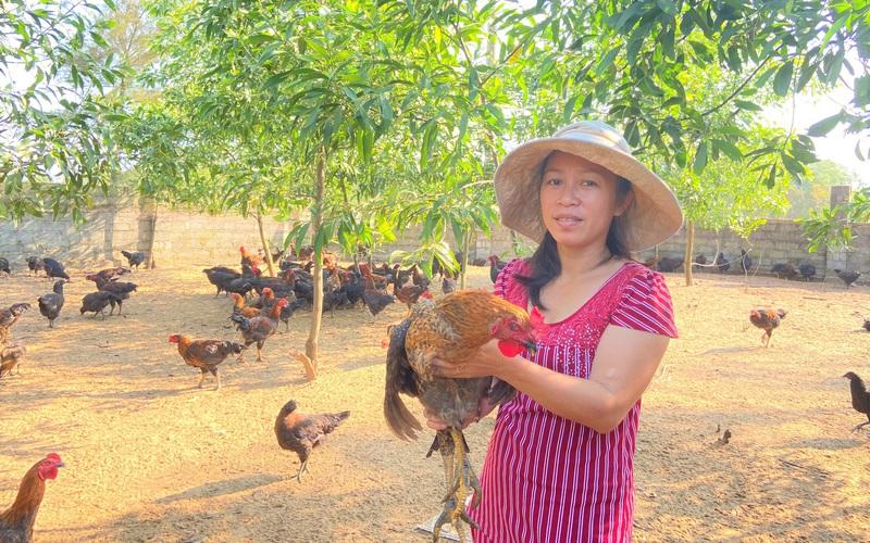 Giá gà tăng cao, tín hiệu vui cho nông dân Hà Tĩnh