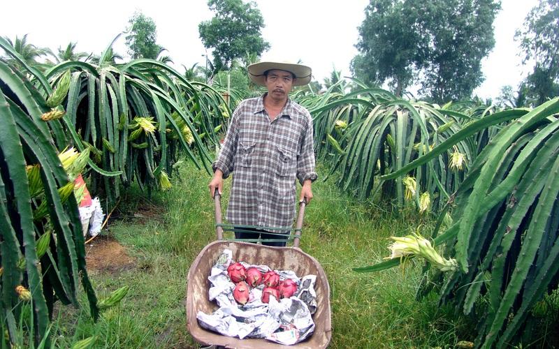 """""""Cảm hứng"""" làm giàu trên vùng đất nông thôn mới Sài thành: Trồng rau """"hoàng đế"""", thanh long kiểu độc lạ"""