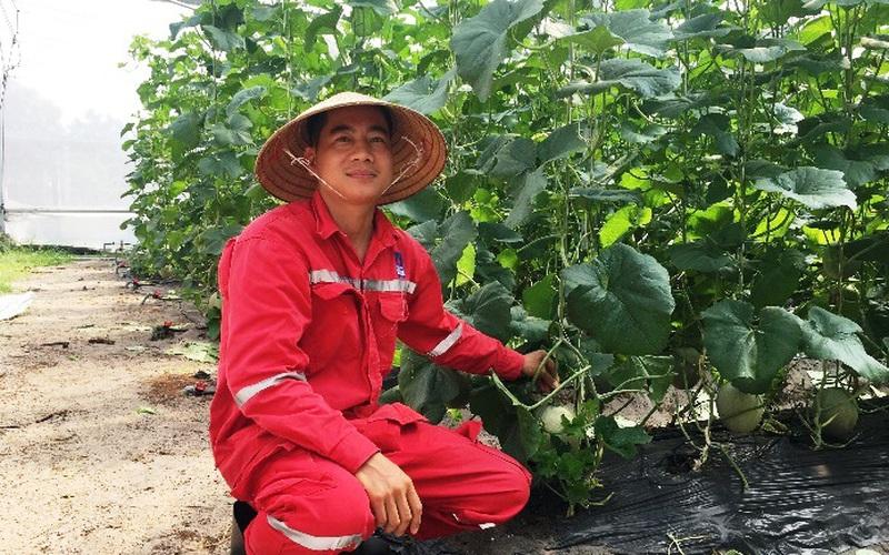 Bà Rịa-Vũng Tàu: Chàng soái ca nhà người ta bỏ làm dầu khí về nhà trồng dưa rồi cũng có tiền tỷ