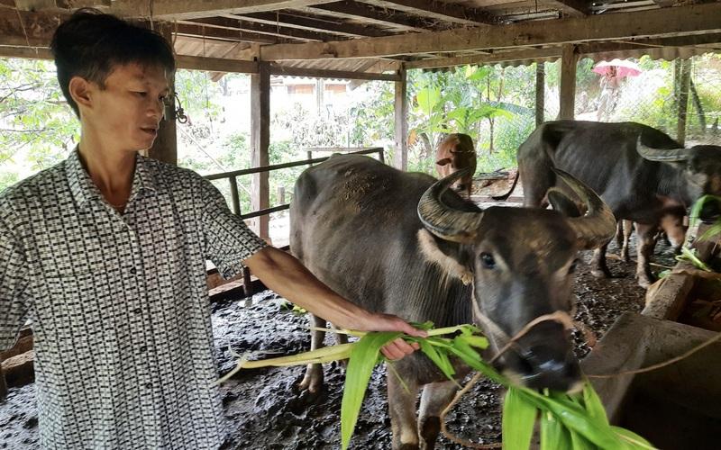 Lai Châu: Nông dân người Thái làm giàu từ mô hình kinh tế tổng hợp
