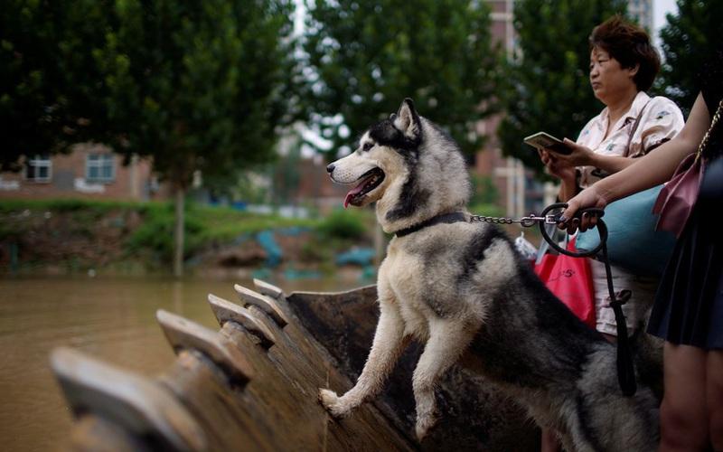 Máy xúc được sử dụng để giải cứu những người mắc kẹt trong lũ lụt ở Trung Quốc