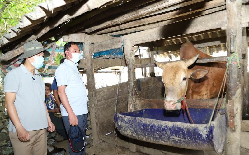 Bệnh viêm da nổi cục nguy cơ lan rộng tại Hà Giang: Kiểm soát chặt việc giết mổ, đốc thúc tiêm vaccine