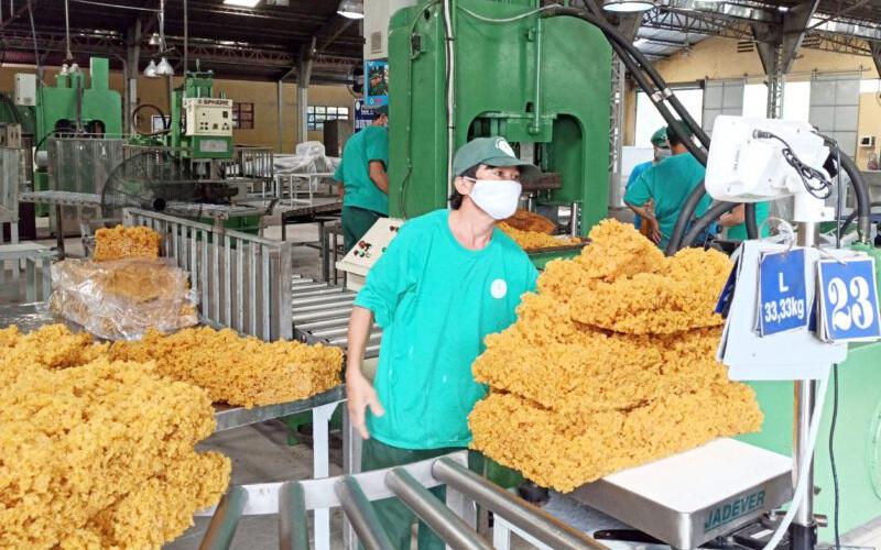 Trung Quốc, Mỹ chi tỷ đô mua vàng trắng Việt Nam, doanh nghiệp cao su báo lãi khủng chưa từng có