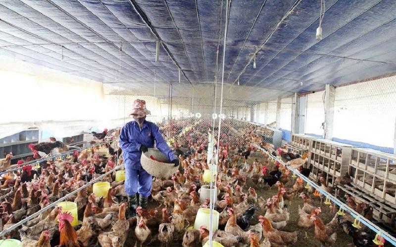 """Ngành chế biến nông sản tìm cách vượt dịch Covid-19 với... """"3 tại chỗ"""" (bài 4):Tăng lương để yên tâm bám vườn, xưởng"""