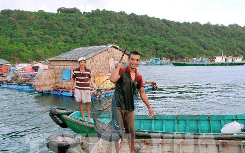 Kiên Giang: Ở nơi này nuôi cá bớp, cá bống mú trên biển bắt toàn con to bự, xách lên ai cũng trầm trồ