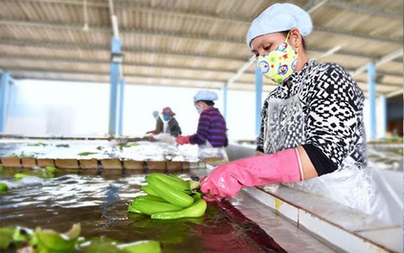 Trung Quốc đột nhiên mua 348.261 tấn trái cây này của Việt Nam, lại mua thêm của Campuchia 180.000 tấn