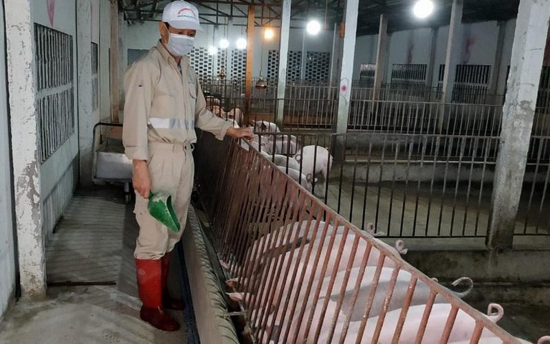 Giá lợn hơi giảm sâu cuối quý III may ra mới phục hồi, nhập khẩu thịt lợn từ Nga vẫn tăng 608%