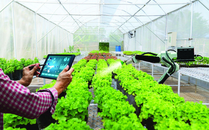 Nông dân cần được quan tâm nhất khi tiến hành nông nghiệp số