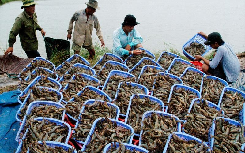 Mỹ, Nhật Bản mua lượng khổng lồ, loại thủy sản này của Việt Nam thu 4,12 tỷ USD, doanh nghiệp vẫn than khó