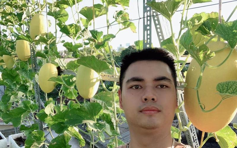 Trầm trồ học hỏi kinh nghiệm trồng dưa thu 3 tạ trên sân thượng
