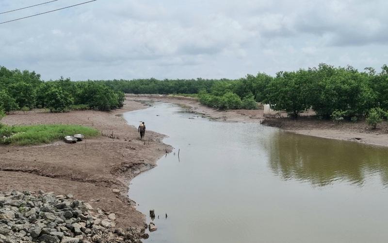 """Ninh Bình: Rừng ngập mặn huyện Kim Sơn, """"báu vật"""" của làng, lá phổi xanh, sản vật vô số"""