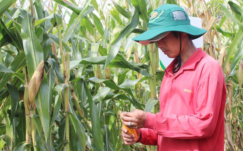 Vì sao Việt Nam xuất khẩu 7 triệu tấn gạo, nhưng vẫn phải nhập 16 triệu tấn ngô, đậu tương?
