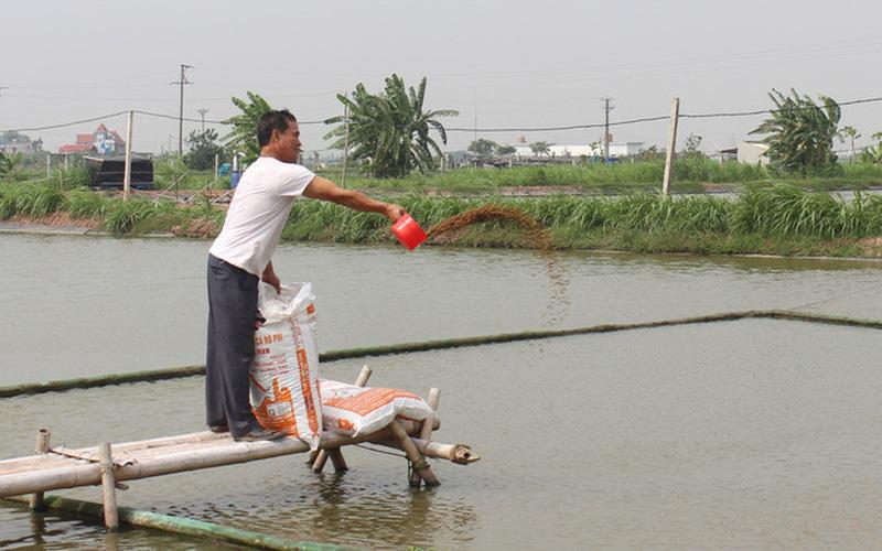 Nam Định: Người nuôi cá đặc sản lao đao vì Covid-19, chuyên gia khuyên làm điều này để thoát hiểm