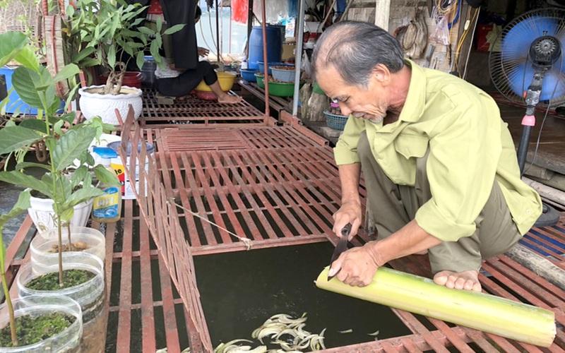 Tuyên Quang: Nhà bè thời Covid-19, dòng sông Lô vắng lặng, người nuôi cá đặc sản buồn tênh