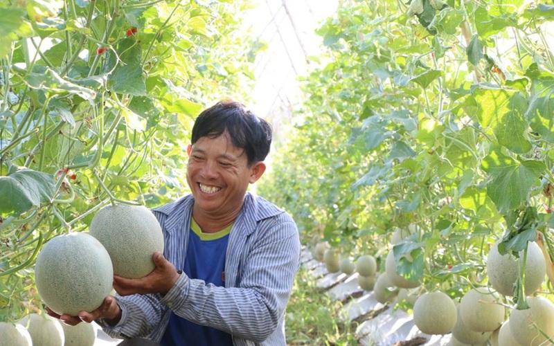 Quảng Ngãi: Chán trồng dưa hấu, anh nông dân trồng thứ quả tròn như trái bóng, dịch giã như thế vẫn bán có lời