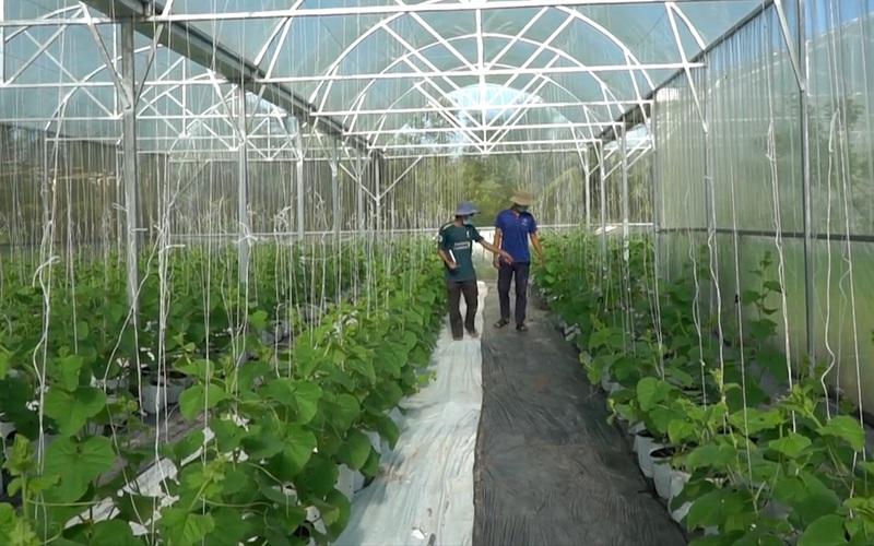 Cần Thơ: Chàng trai lập nghiệp bằng nghề tư vấn cho các nhà vườn