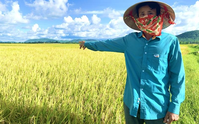 Quảng Bình: Nông dân Ba Đồn phấn khởi, bất ngờ với giống lúa DV108, đến ngày thu hoạch đạt hơn 60 tạ/ha
