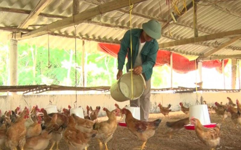 Kinh tế nông hộ đi lên từ mô hình trang trại tổng hợp