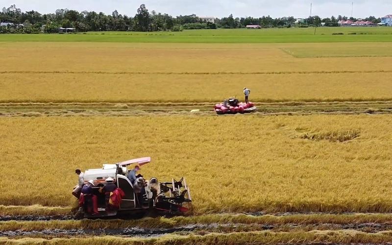 Bạc Liêu đề nghị Hậu Giang và Sóc Trăng hỗ trợ để thu hoạch lúa Hè Thu 2021