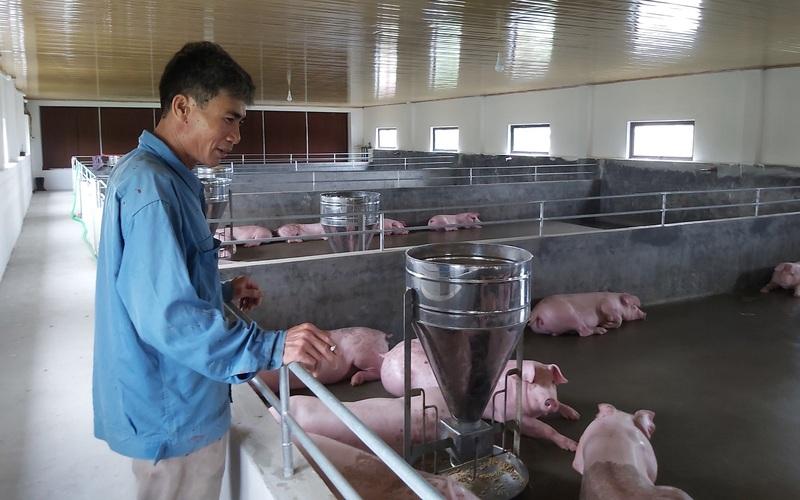 Thái Bình: Đưa thức ăn chăn nuôi vào danh sách hàng bình ổn giá sẽ có nhiều cái lợi