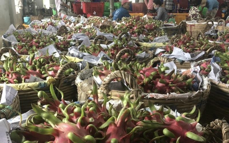 Trung Quốc siết chặt nhập khẩu nông sản, Bộ NN&PTNT đang nỗ lực kết nối thị trường