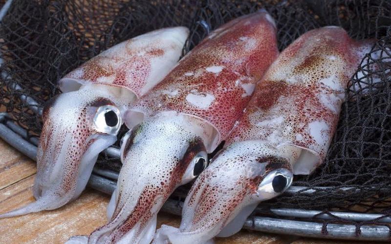Hàn Quốc là thị trường nhập khẩu mực, bạch tuộc lớn nhất của Việt Nam