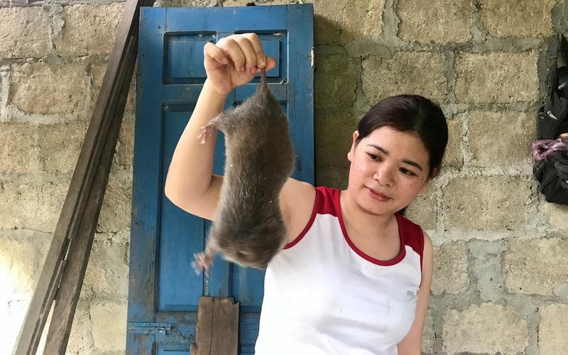 Đào con này trên rừng về nuôi, nhiều hộ dân ở huyện vùng cao tỉnh TT-Huế bất ngờ đổi đời vì thu lãi cao