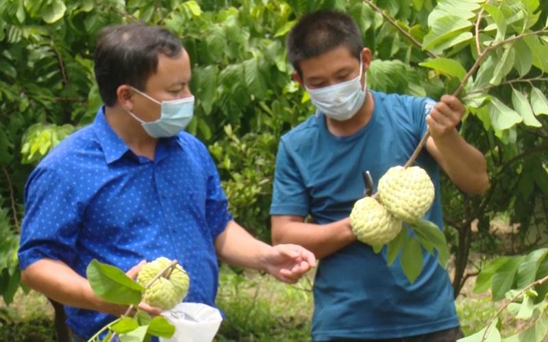 Giống na mang tên quý phái cho thu nhập tiền tỷ ở Sơn La